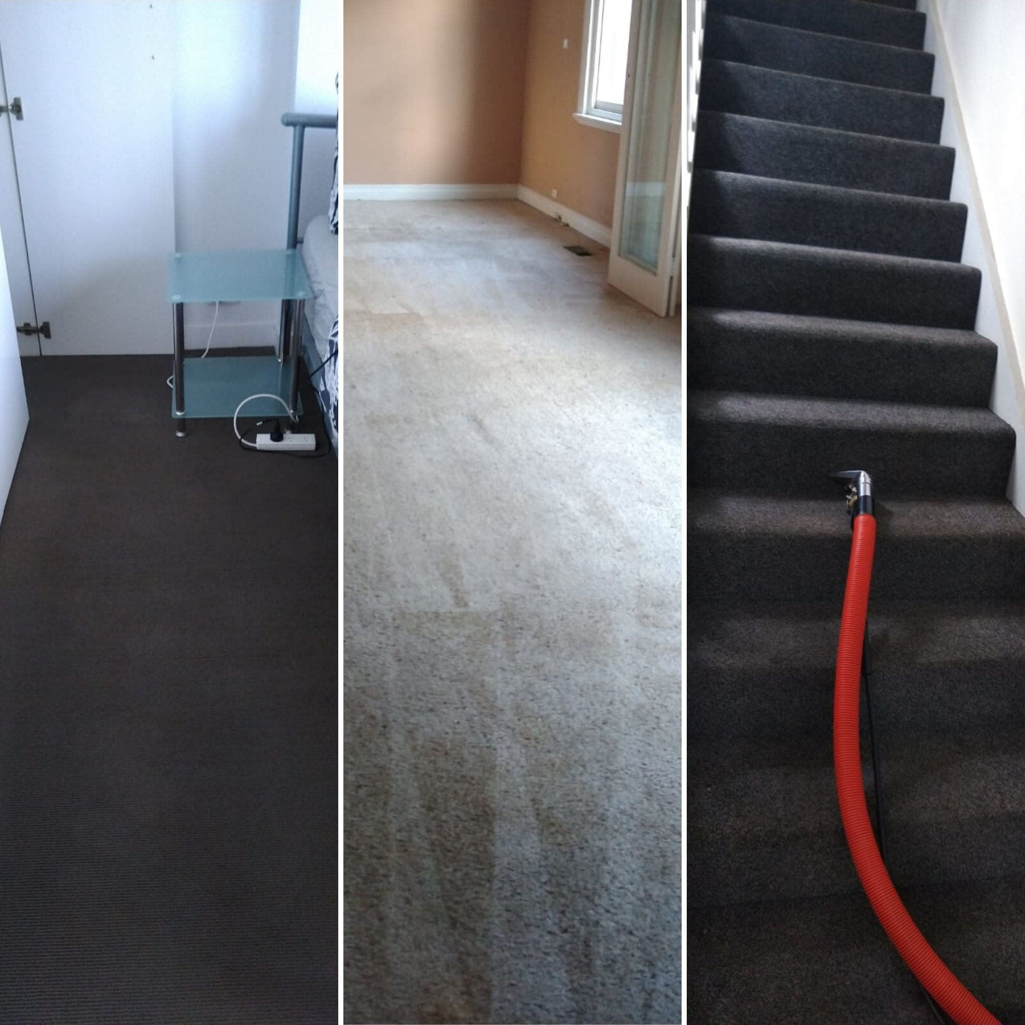 Professional carpet steam cleaning process